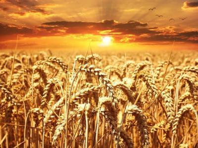 Группа компаний АИС осуществила поставку партии сельхозтехники Агрофирме «Свитанок»